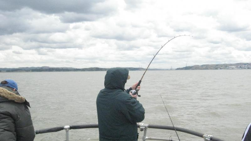 Predator sport fishing trips enjoy some of our catches for San francisco bay fishing charters
